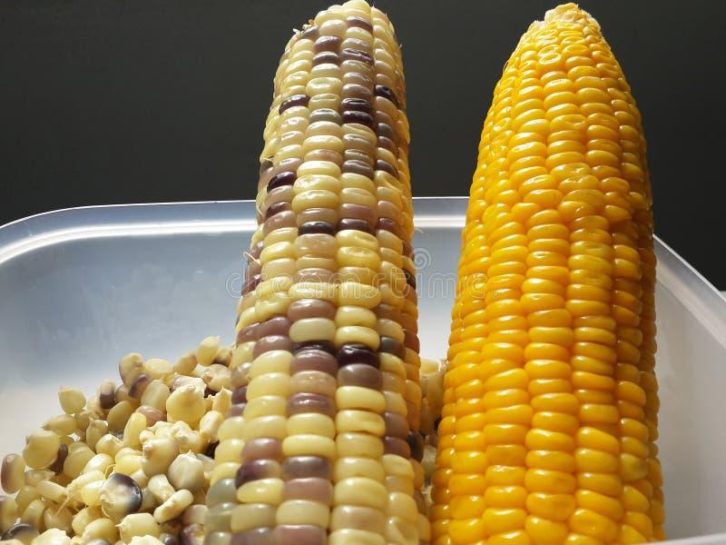Wasachtig graan en suikermaïs stock foto