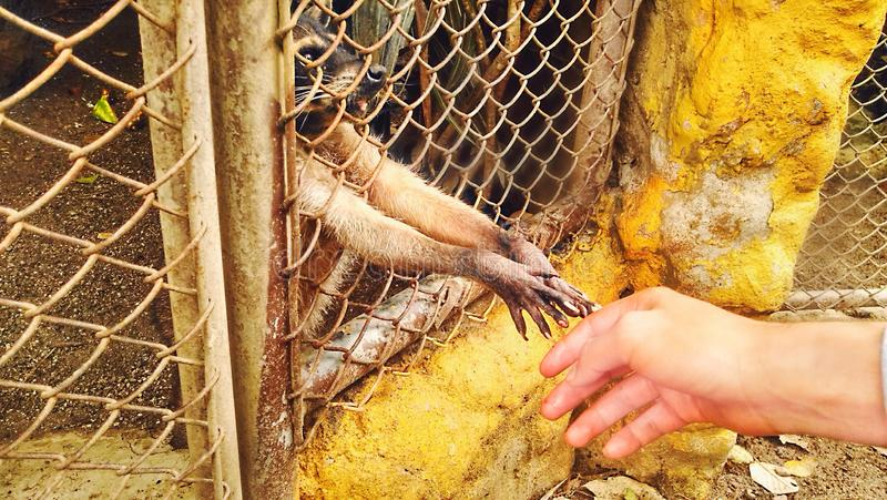 Wasbeer, Medellin royalty-vrije stock afbeelding