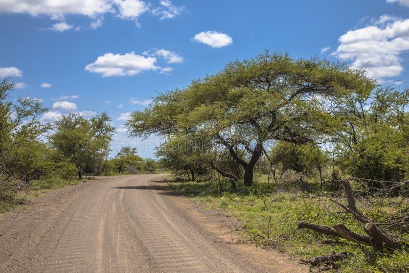 Wasboarding in het Kruger park royalty-vrije stock fotografie