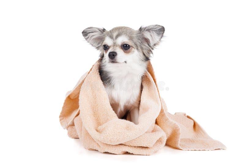 Waschen Sie den Hund stockfotografie
