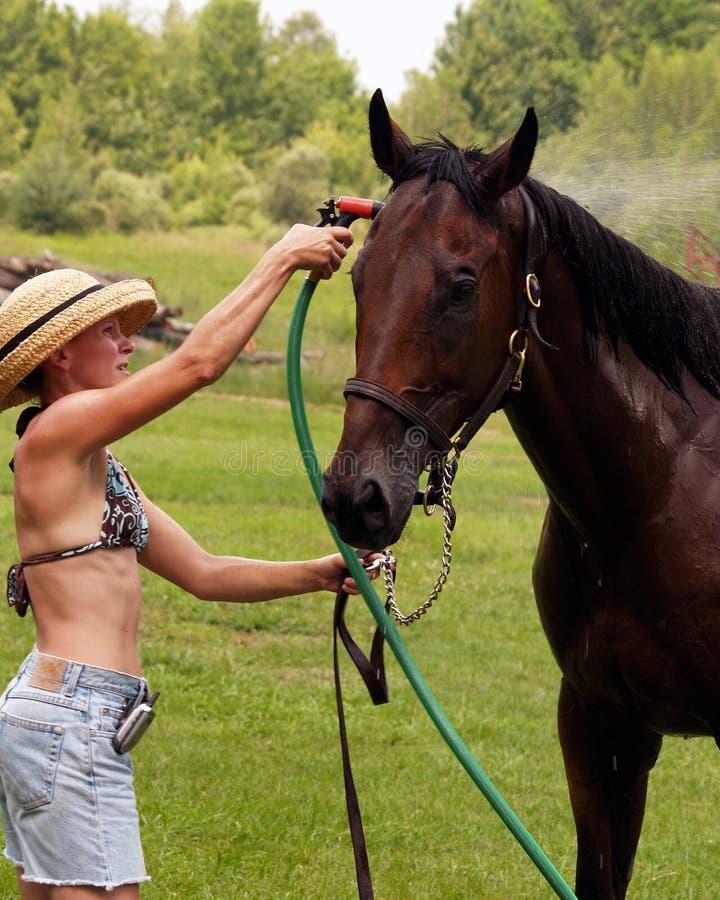 wash för 2 kortslutningar för flickahatthäst royaltyfria foton