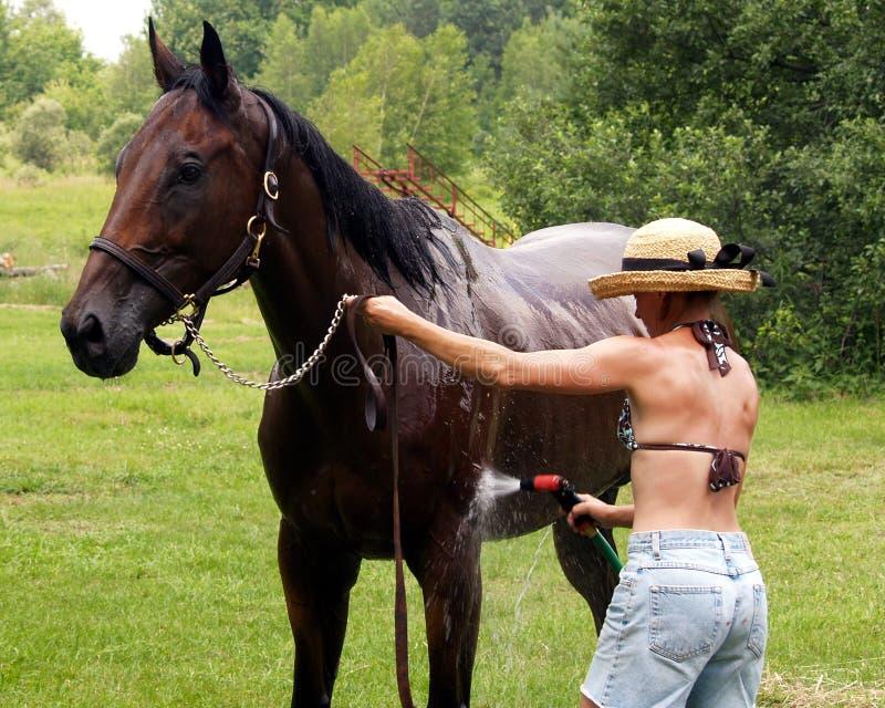 wash för kortslutningar för flickahatthäst royaltyfri foto