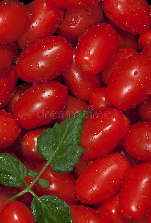 Free Washed Red Grape Tomatoes Stock Images - 32704614