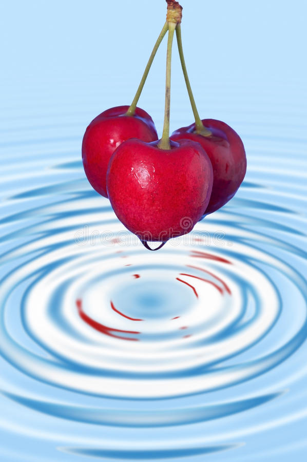 Download Washed three cherries stock image. Image of life, image - 25501715