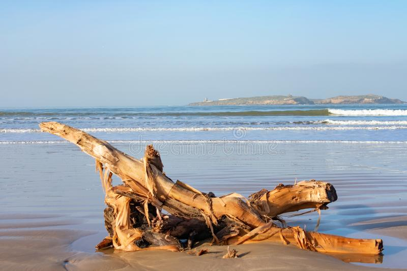 Washed Up Wood on a Beach in Essaouria Morocco with Mogador Island in the background. Washed up wood on a beach along the Atlantic Ocean with Mogador Island in royalty free stock photo