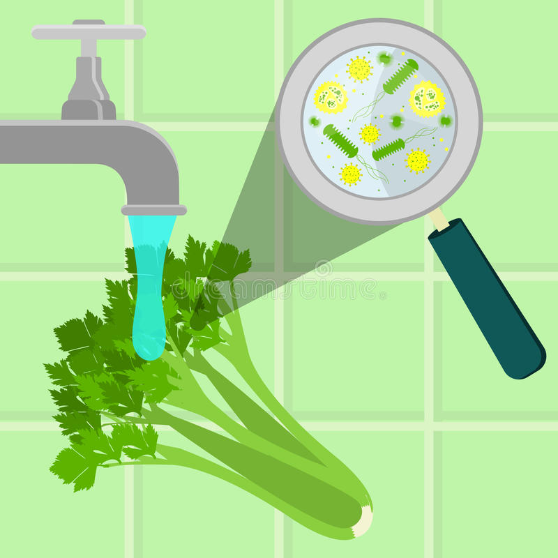 Washing contaminated celery. Contaminated celery being cleaned and washed in a kitchen. Microorganisms, virus and bacteria in the vegetable enlarged by a stock illustration