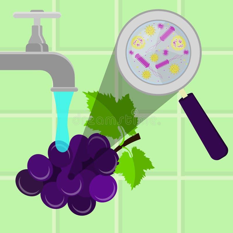 Washing contaminated grape royalty free illustration