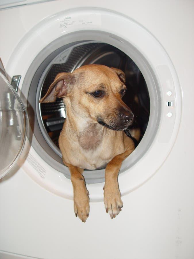 Washing and dog stock image