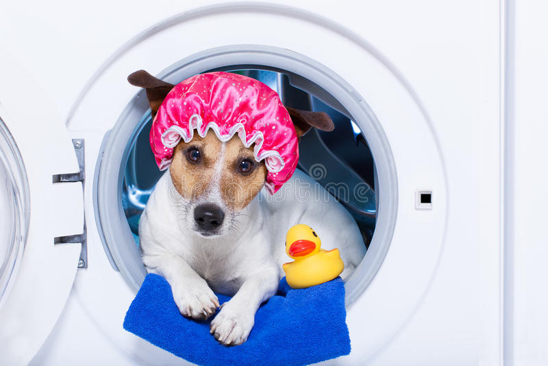 Washing dog stock images