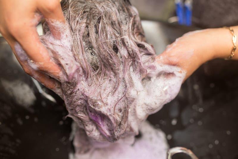 Washing of female hair royalty free stock images