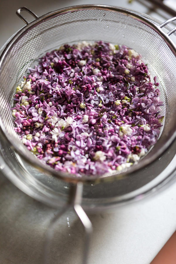 Washing lilac flowers in a sieve. Preparation of flowers jelly stock photos