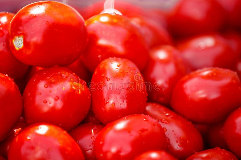 Washing tomatoes for tomato paste stock photos