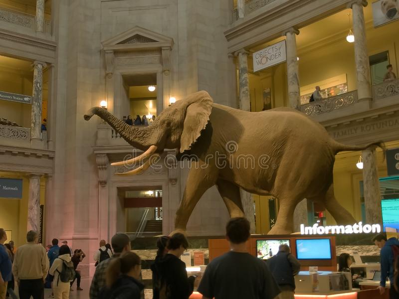 WASHINGTON, C.C, Etats-Unis - avril, 3, 2017 : foyer principal du musée d'histoire naturelle de Smithsonien dans DC de Washington image stock
