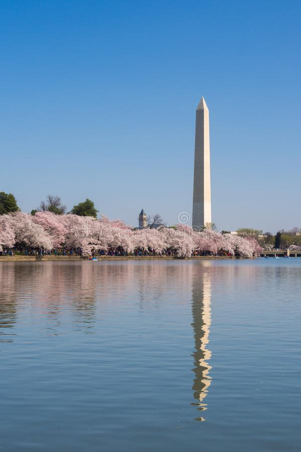 Washington Cherry Blossoms stockbilder