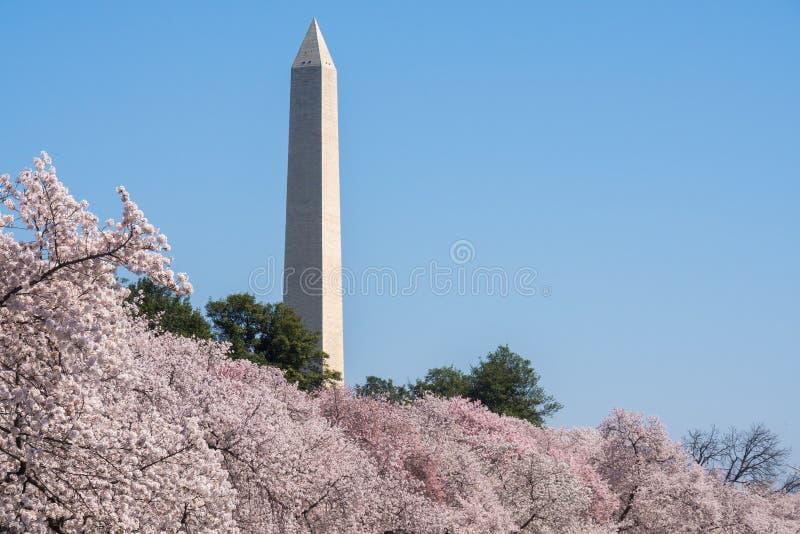 Washington Cherry Blossoms stockfotos