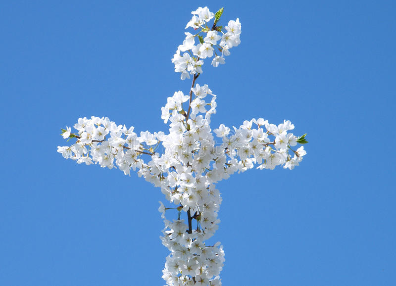 Download Washington Cherry Blossoms Cross 2010 Stock Photo - Image: 15438972