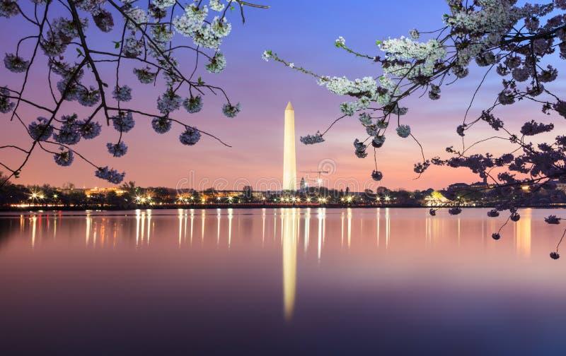Washington DC Cherry Blossom Festival imagem de stock royalty free
