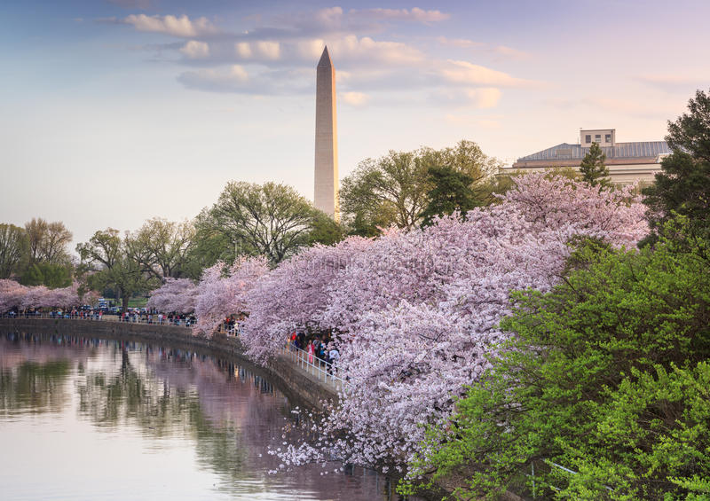 Washington DC Cherry Blossom Festival fotografia stock libera da diritti