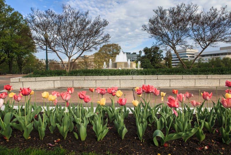 Washington DC del jardín del senado foto de archivo