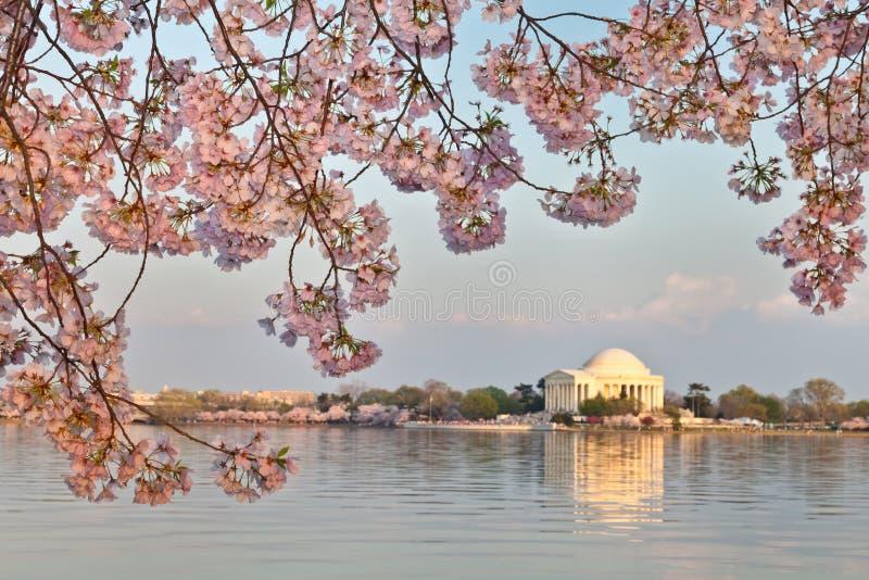 Washington DC Jefferson Memorial royalty free stock photo