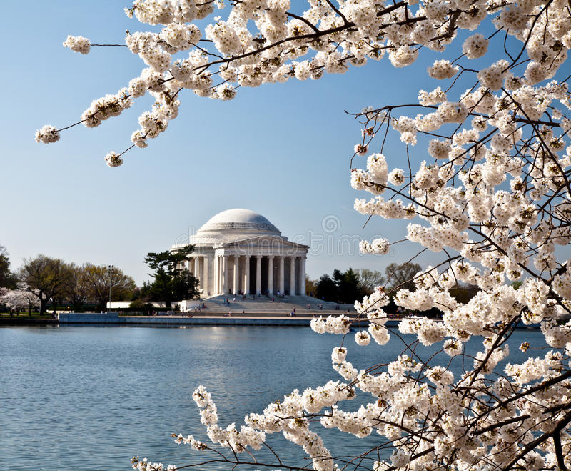 Washington DC Jefferson Memorial Blossoms royalty free stock photos