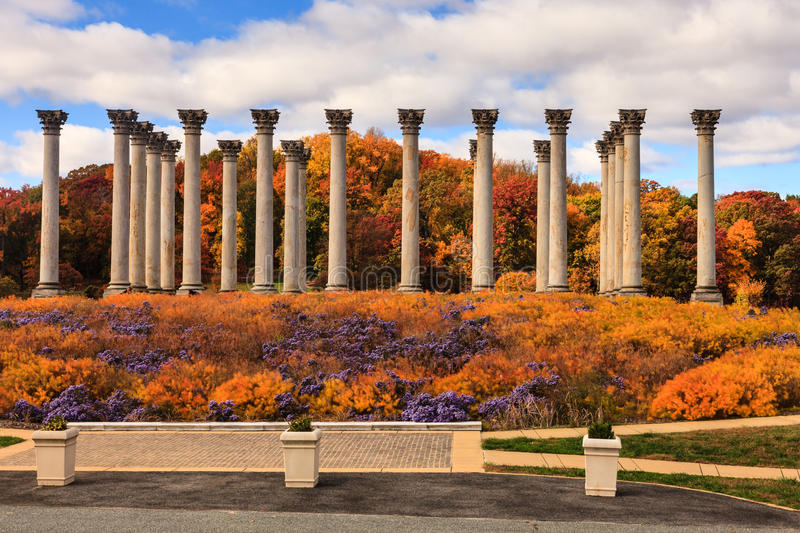 Download Washington DC National Capitol Columns In Autumn Stock Image - Image of capital, golden: 34909229