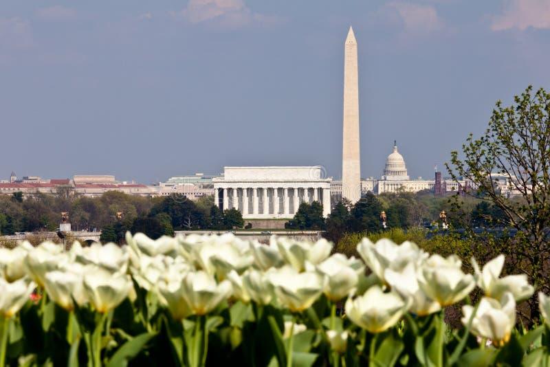 Washington DC Skyline with Tulips stock images