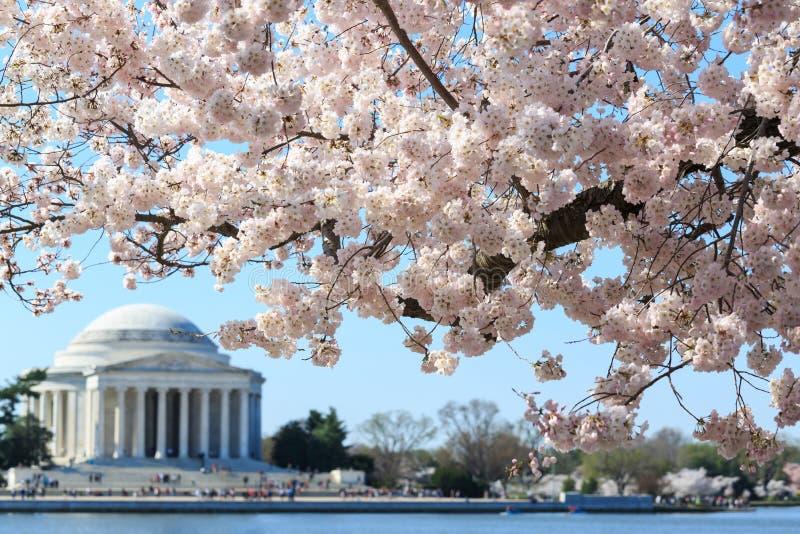 Washington DC, Thomas Jefferson pomnik podczas Czereśniowego okwitnięcia F zdjęcia royalty free