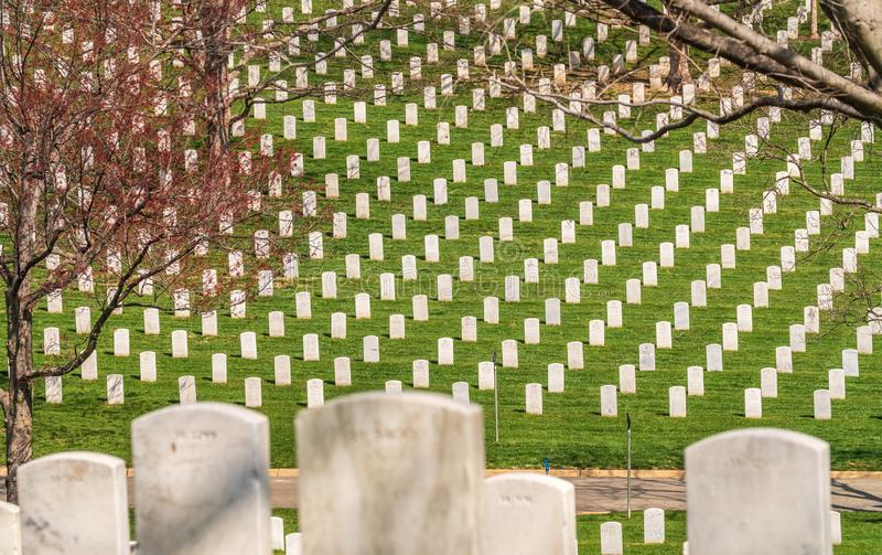 Washington DC / United States - April 03 2019: Headstones at Arlington National cemetery. Rows of Headstones at Arlington National Cemetery stock images