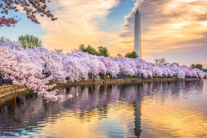 Washington DC USA i vår fotografering för bildbyråer