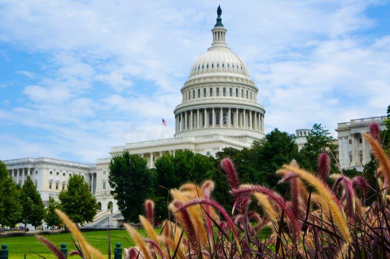 Washington DC, USA 08 18 2018 USA-Kapitoliumbyggnad bak det färgrika gräset Sommar dag arkivfoton