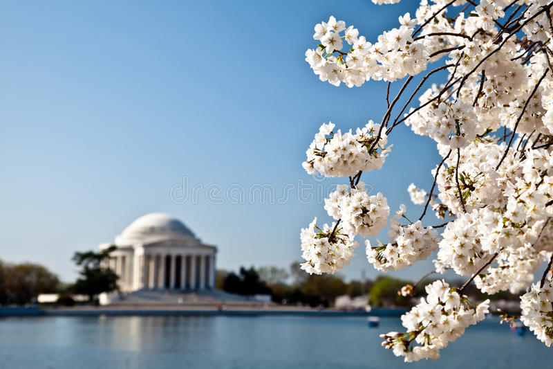 Washington DCjefferson-Denkmal-Blüten stockfoto