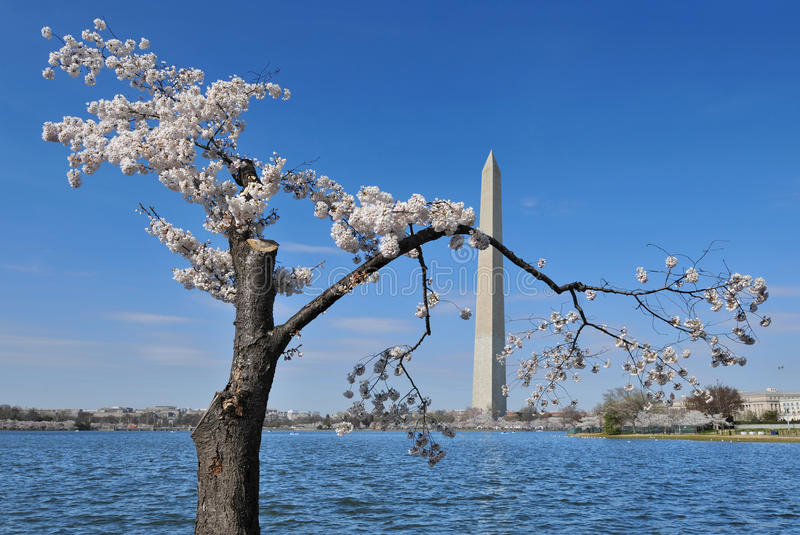 Download Washington Monument stock image. Image of flower, american - 19705955