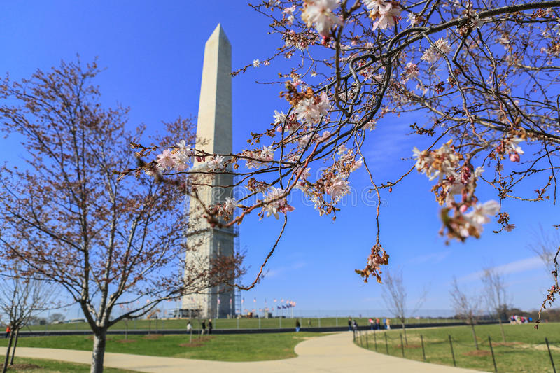 Washington Monument fotos de stock