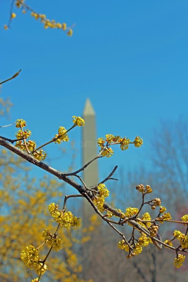 Washington Monument fotografia stock libera da diritti