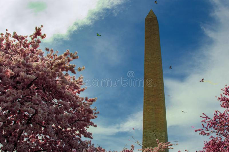Washington monument with cherry blossoms and kites stock photo