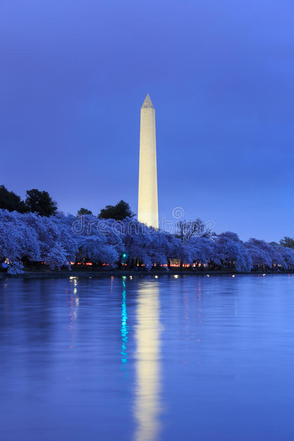 Washington Monument durante Cherry Blossom Festival no twilig fotografia de stock