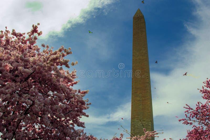 Washington monument med körsbärsröda blomningar och drakar arkivfoto