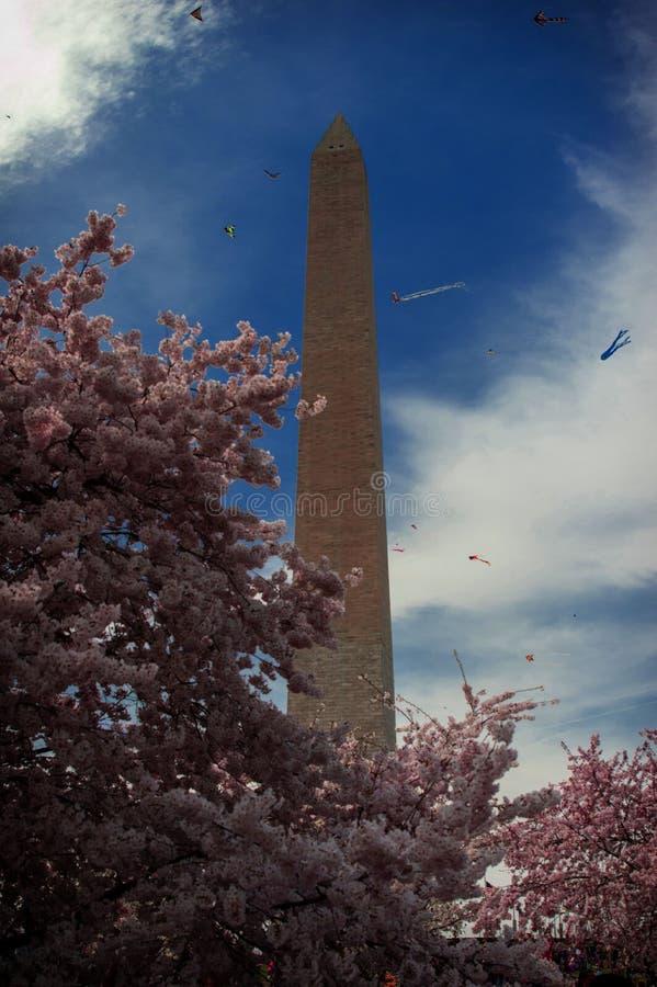 Washington monument med körsbärsröda blomningar och drakar arkivfoton