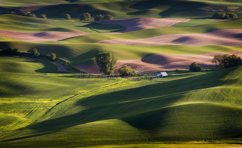 Washington Palouse royaltyfri fotografi
