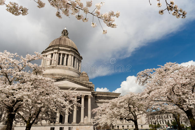 Washington State Capital Building Olympia vår Cherry Blos royaltyfri fotografi