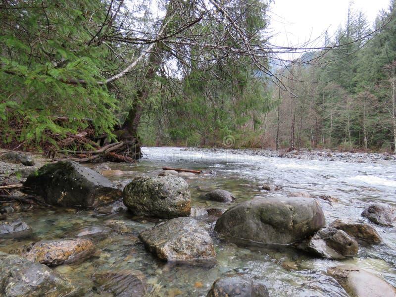 WASHINGTON State Twin Falls Trail, parque estadual de Olallie imagem de stock