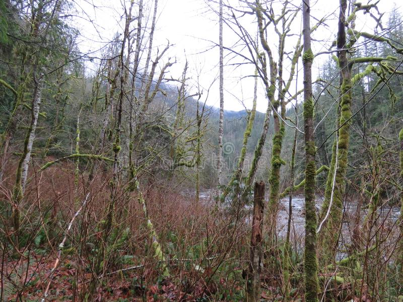 WASHINGTON State Twin Falls Trail, parque estadual de Olallie imagem de stock royalty free