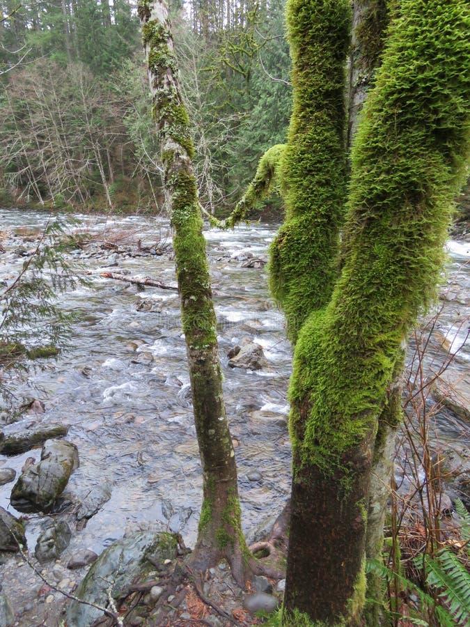 WASHINGTON State Twin Falls Trail, parque estadual de Olallie imagens de stock royalty free