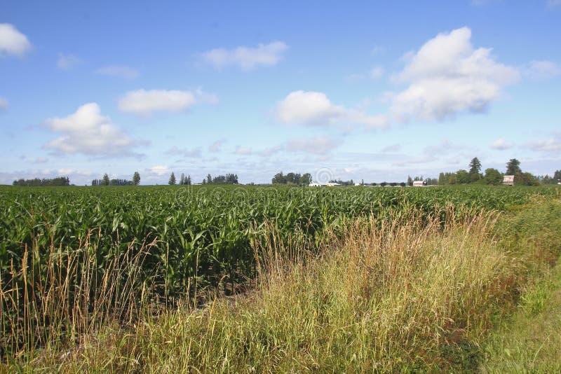 Washington Summer Crops photographie stock libre de droits