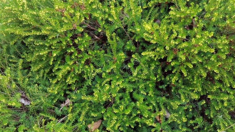 Washington Vegetation immagini stock