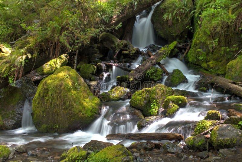 Washington Waterfall image stock