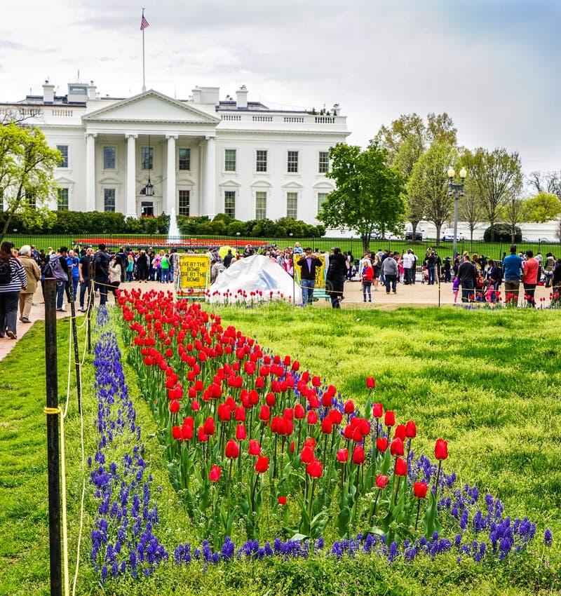Washington White House blommor royaltyfri fotografi
