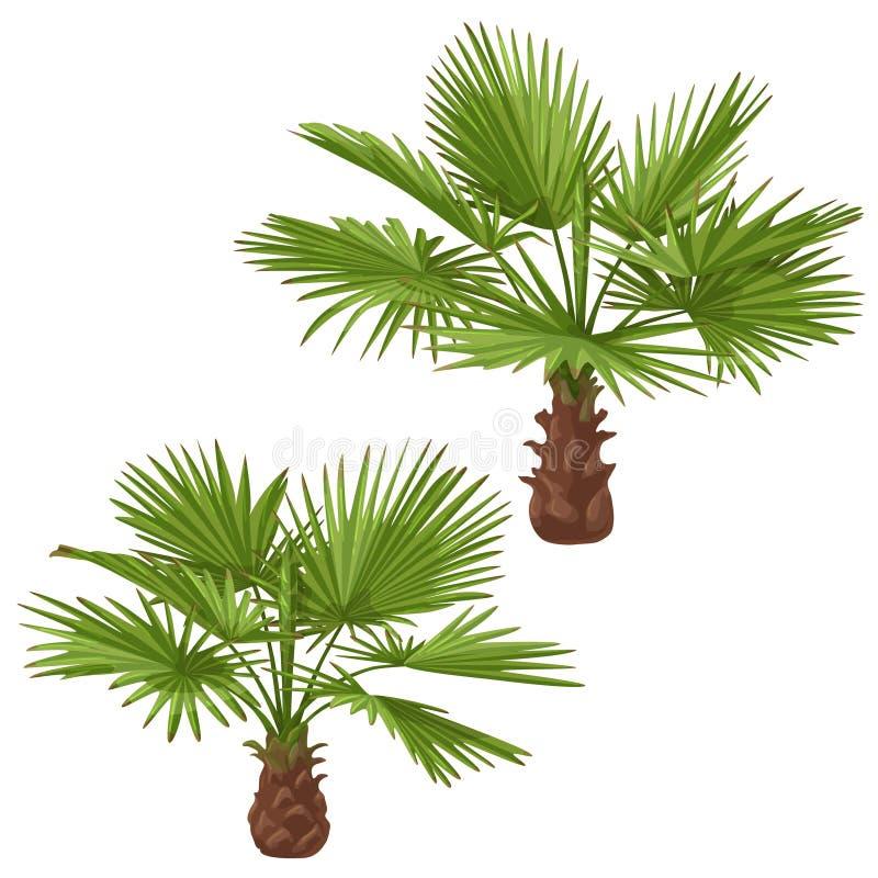 Washingtonia drzewka palmowe Odizolowywający ilustracji