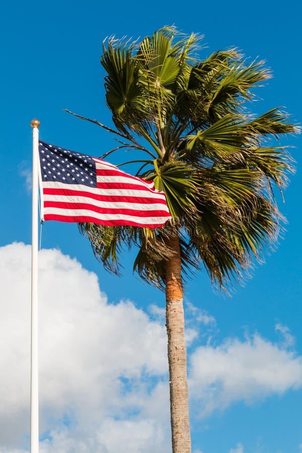 Washingtonia Robusta flaga amerykańska i drzewko palmowe zdjęcie royalty free